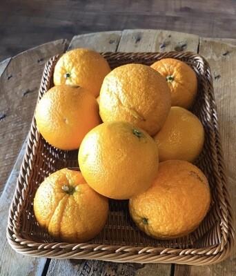 Orange Each