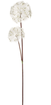 Dandelion Stem LG