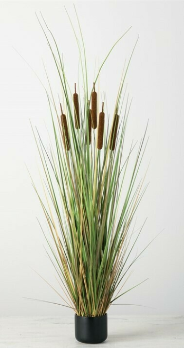 Potted Cattail Grass
