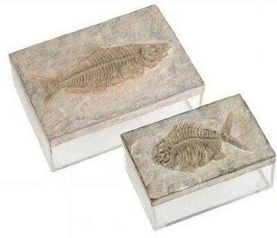 Fish Fossil Box