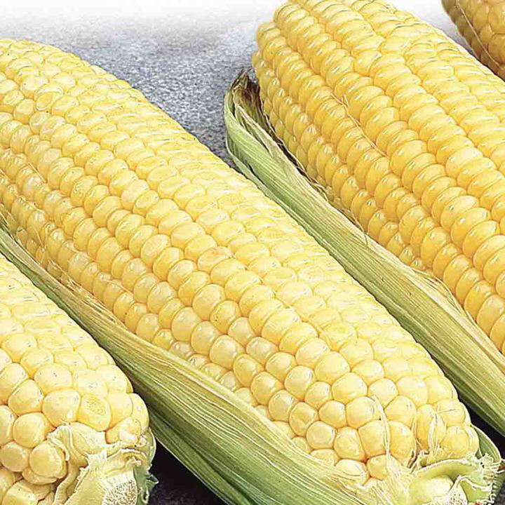 Corn Canadian Early Supersweet