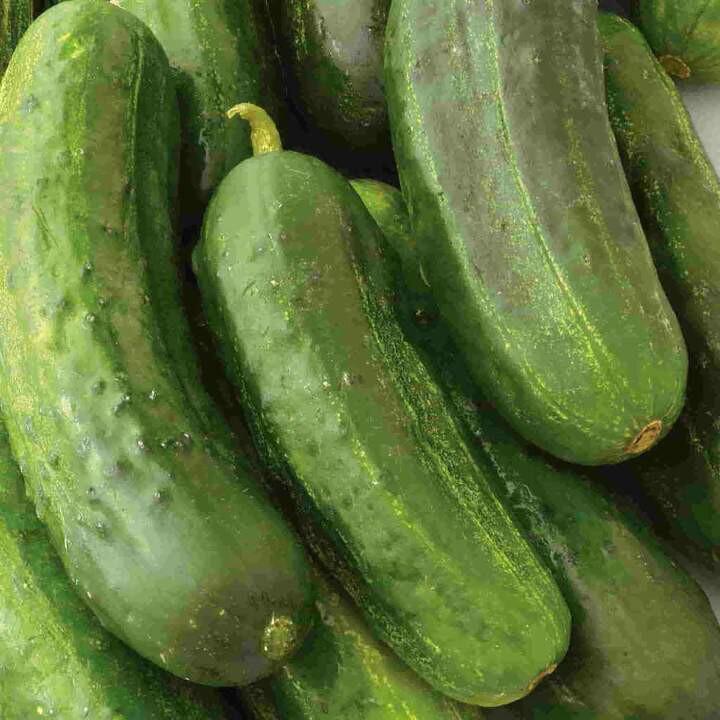Cucumber Heirloom National Pickling