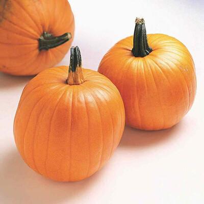 Pumpkin Jack O'lantern