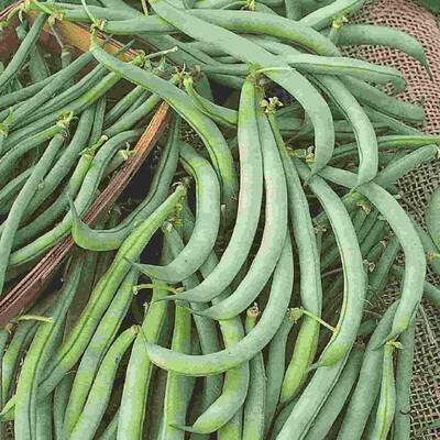 Beans Tendergreen Heirloom