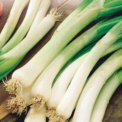 Onion Annual Bunching
