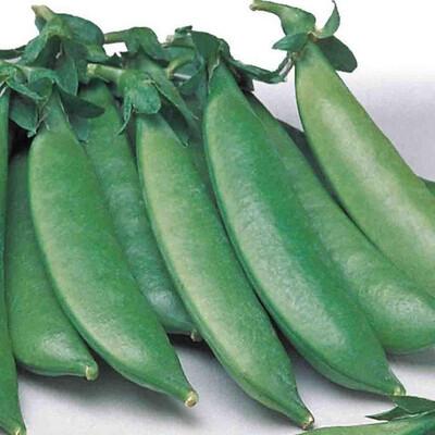 Peas Heirloom Sugar Sprint