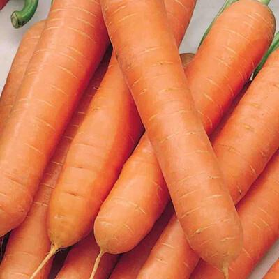 Carrots Jumbo Heirloom Scarlet Nantes