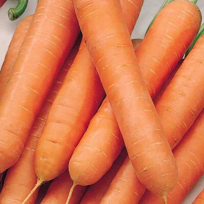 Carrot Heirloom Scarlet Nantes