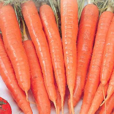 Carrot Heirloom Tenderlong