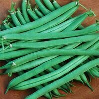 Bean Provider Organic