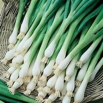 Onion Evergreen Bunching Organic
