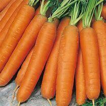 Carrot Nantes Organic