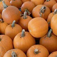 Pumpkin Small Sugar Organic