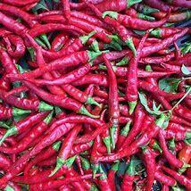 Pepper Long Red Cayenne Organic