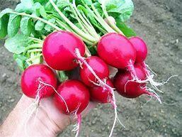 Radish Cherry Belle Organic