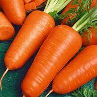 Carrot Chantenay Organic