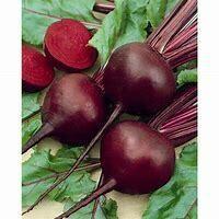 Beet Detroit Dark Red Organic