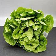 Lettuce Cos Or Romaine