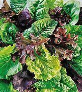 Mesclun Gourmet Greens Mix
