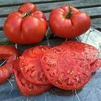 Tomato Beefsteak Organic