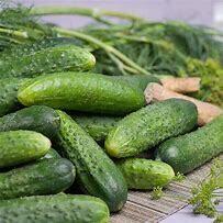 Cucumber National Pickling Organic