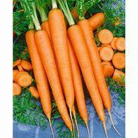 Carrot Imperator Organic