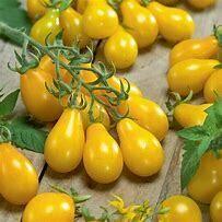 Tomato Yellow Pear Organic