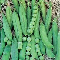 Pea Green Arrow Organic