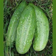 Cucumber Boston Pickling