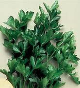 Parsley Italian Dark Green Organic