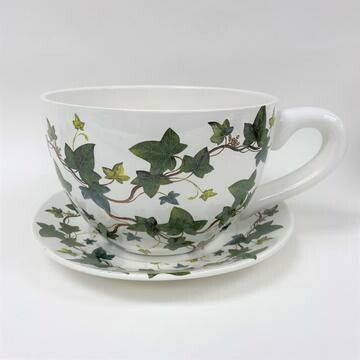 Tea Cup Pot Ivies (Various Sizes)