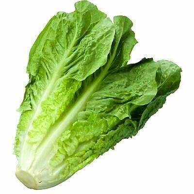 Cos Lettuce ( Each Pc)