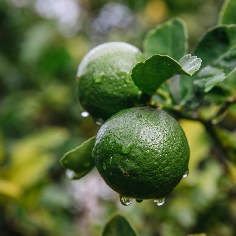 STYX Žaliosios citrinos   (Citrus medica var.acida) eterinis aliejus