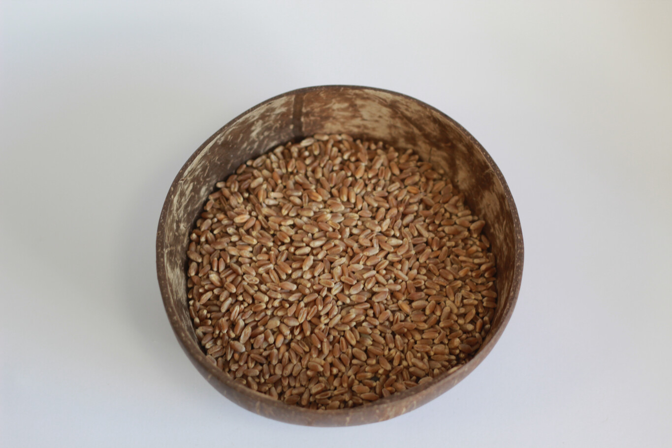 High Protein Wheat Grain 100g