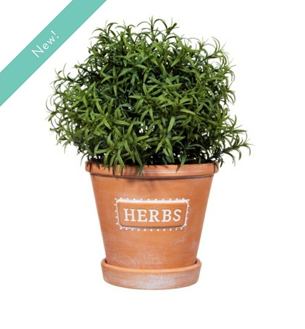 Herbs Terracotta planter with saucer