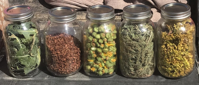 Class - Exploring Herbalism - April 25th