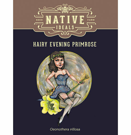 Hairy Evening Primrose Native Wildflower Seeds $4.50