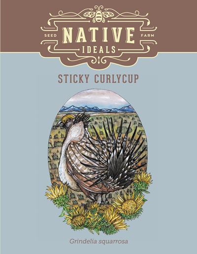 Sticky Curlycup Native Wildflower Seeds $4.50