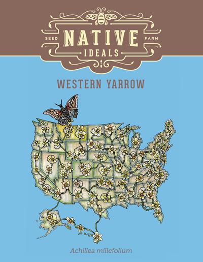 Western Yarrow Native Wildflower Seeds $4.50