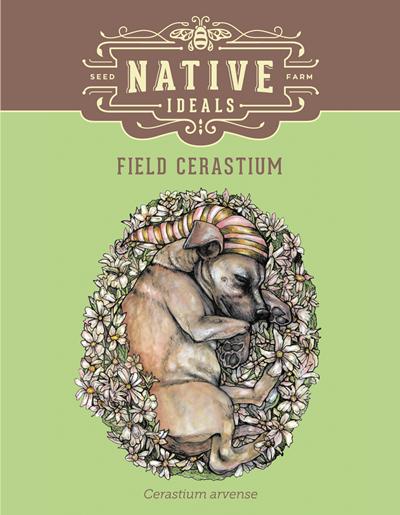 Field Cerastium Native Wildflower Seeds $4.50