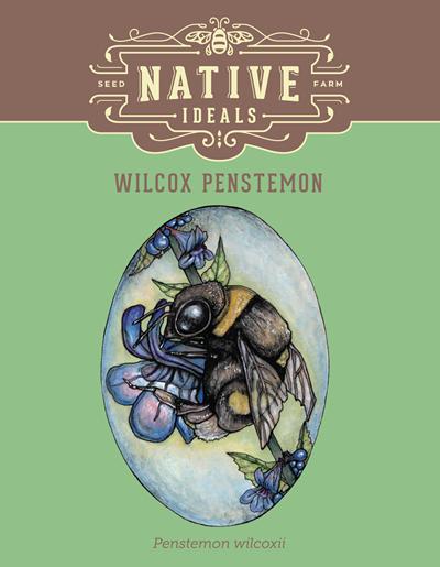 Wilcox Penstemon Native Wildflower Seeds $4.50