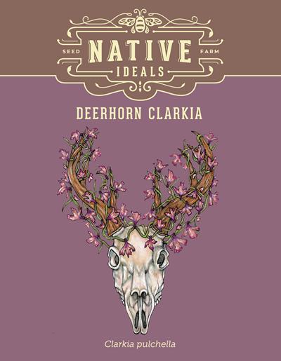 Deerhorn Clarkia Native Wildflower Seeds $4.50