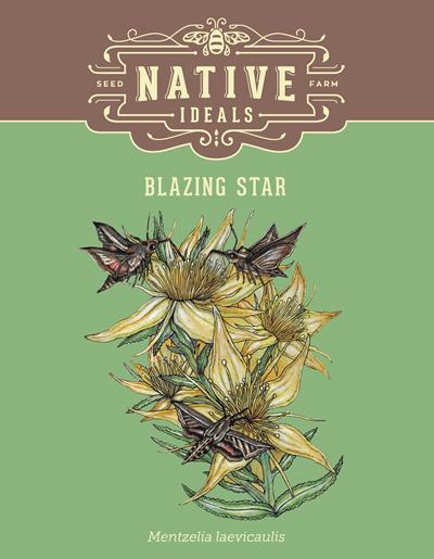 Blazing Star Native Wildflower Seeds $4.50