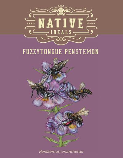 Fuzzytongue Penstemon Native Wildflower Seeds $4.50