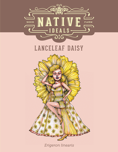 Lanceleaf Daisy Native Wildflower Seeds $4.50