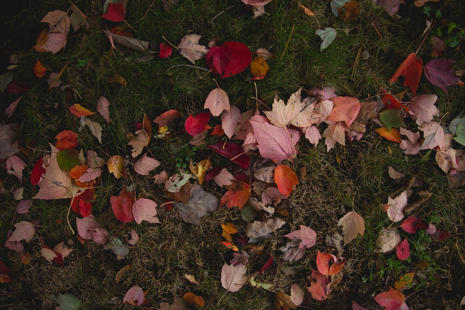 Fall! Puzzle