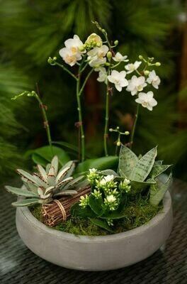 Arranjo Garden com orquídea