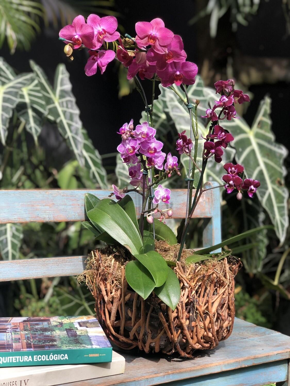 Cesta ninho com Orquídeas