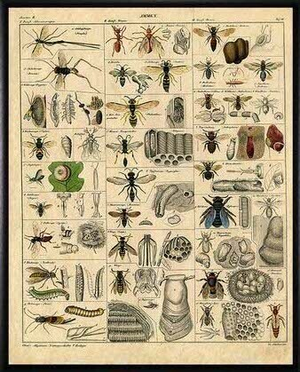 Poster-Different Types of Bees
