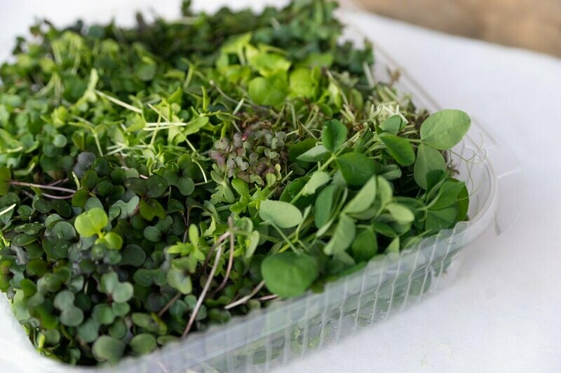 Microgreens Sampler